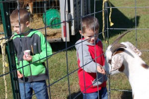 (Photo by Hannah Davis) At left, brothers Cohyn (left) and Colton (right) Parsons feed goats at the event on Saturday. See more photos at www.kenbridgevictoriadispatch.com.